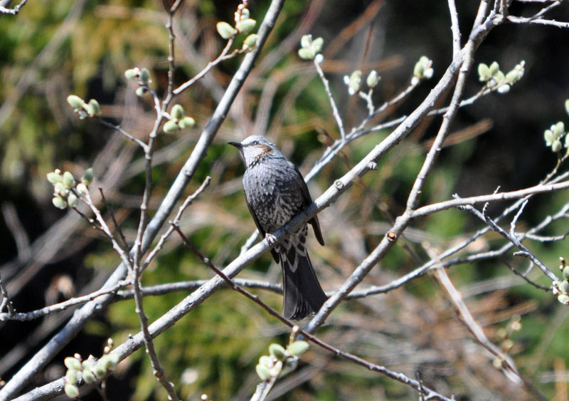 野鳥の季節_e0162117_18534980.jpg