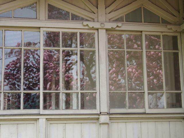 過ぎゆく八重桜の季節_a0257652_1792546.jpg