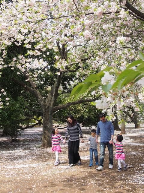過ぎゆく八重桜の季節_a0257652_1795315.jpg