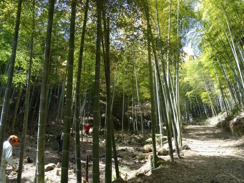 第2回「里香海」多奈川竹林筍狩り_c0108460_20290290.jpg