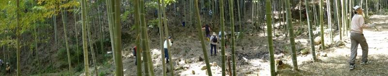 第2回「里香海」多奈川竹林筍狩り_c0108460_20290345.jpg