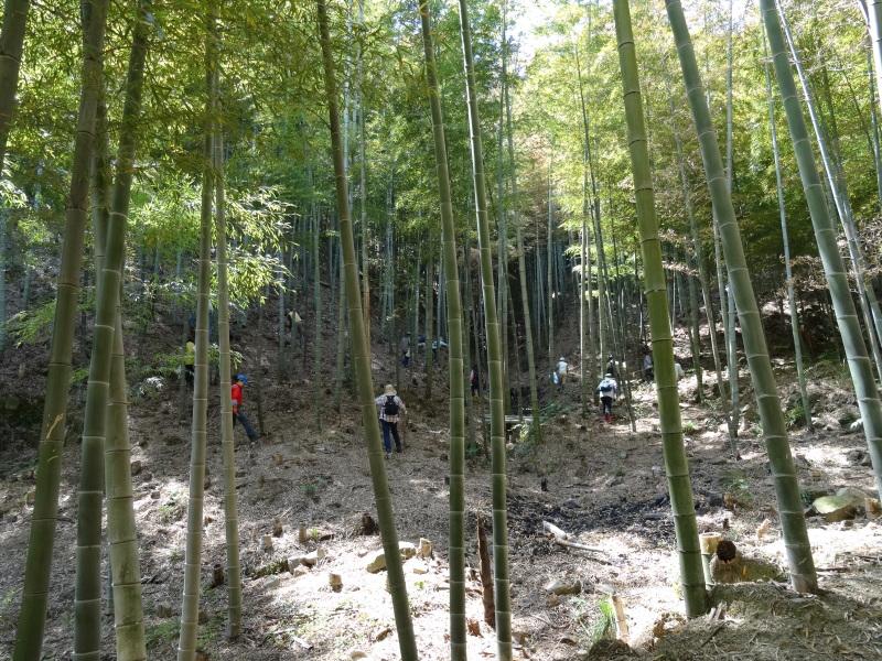 第2回「里香海」多奈川竹林筍狩り_c0108460_20304842.jpg