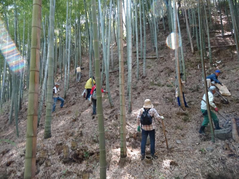 第2回「里香海」多奈川竹林筍狩り_c0108460_20304989.jpg