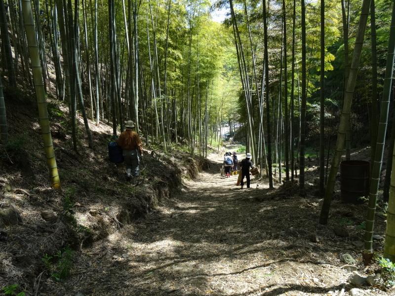 第2回「里香海」多奈川竹林筍狩り_c0108460_20305239.jpg