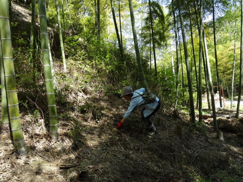 第2回「里香海」多奈川竹林筍狩り_c0108460_20305314.jpg
