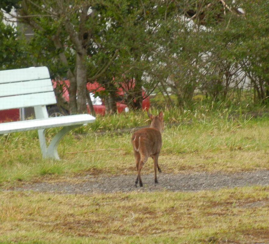 '14,4,23(水)子鹿と『野原の散歩道』_f0060461_1013189.jpg
