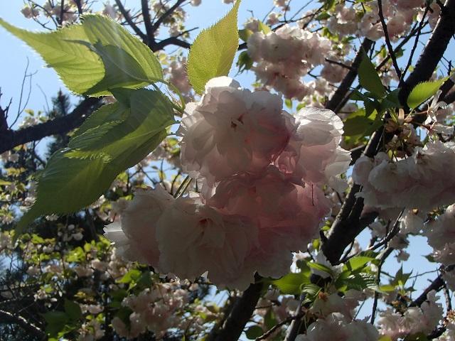 花々   (いろいろ・・・)_d0105967_16105049.jpg