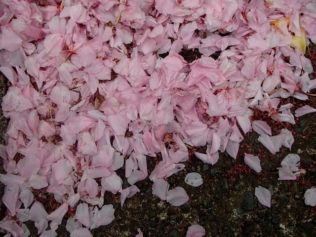 花々   (いろいろ・・・)_d0105967_16114963.jpg