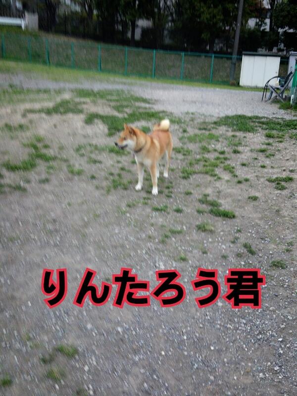 f0230380_12112832.jpg
