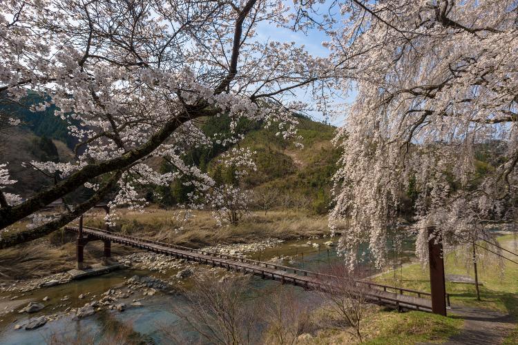 京北の桜を求めて ~前編~_e0051888_21482694.jpg