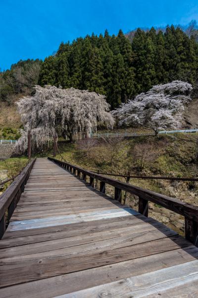 京北の桜を求めて ~前編~_e0051888_21483998.jpg