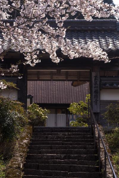 京北の桜を求めて ~前編~_e0051888_21491012.jpg