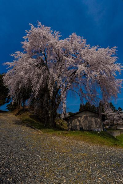 京北の桜を求めて ~前編~_e0051888_2151539.jpg