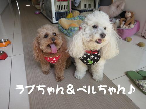 ひかり電話セッティングPart.3!_b0200291_2112719.jpg