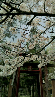 栗川稲荷神社の例大祭の見学に行ってきました_f0168392_15363626.jpg