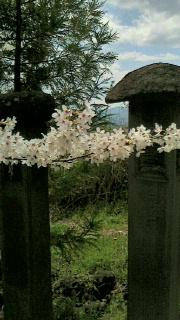 栗川稲荷神社の例大祭の見学に行ってきました_f0168392_15371595.jpg