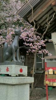 栗川稲荷神社の例大祭の見学に行ってきました_f0168392_15472694.jpg