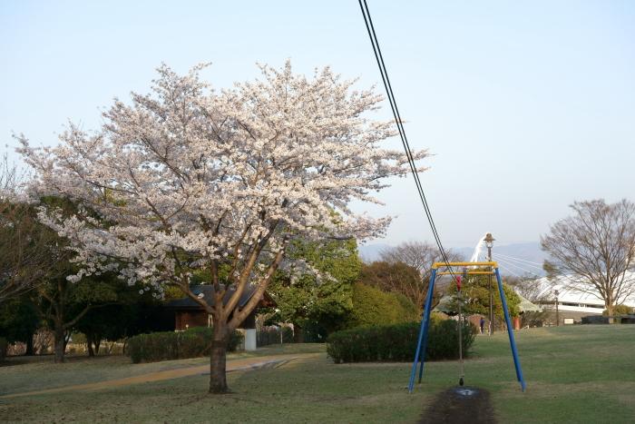 運動公園の桜_e0135098_6352834.jpg