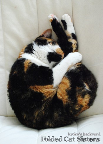 折れ曲がり寝の姉妹猫_b0253205_4533959.jpg