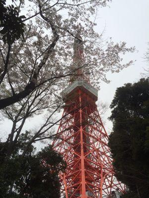 ☆今年の桜〜☆_d0265309_3443451.jpg