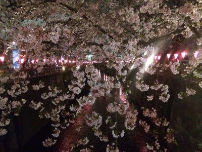 ☆今年の桜〜☆_d0265309_3443868.jpg