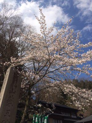 ☆今年の桜〜☆_d0265309_3445139.jpg