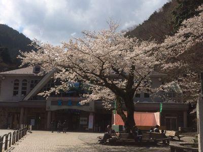 ☆今年の桜〜☆_d0265309_3445367.jpg