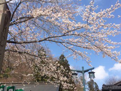 ☆今年の桜〜☆_d0265309_344554.jpg