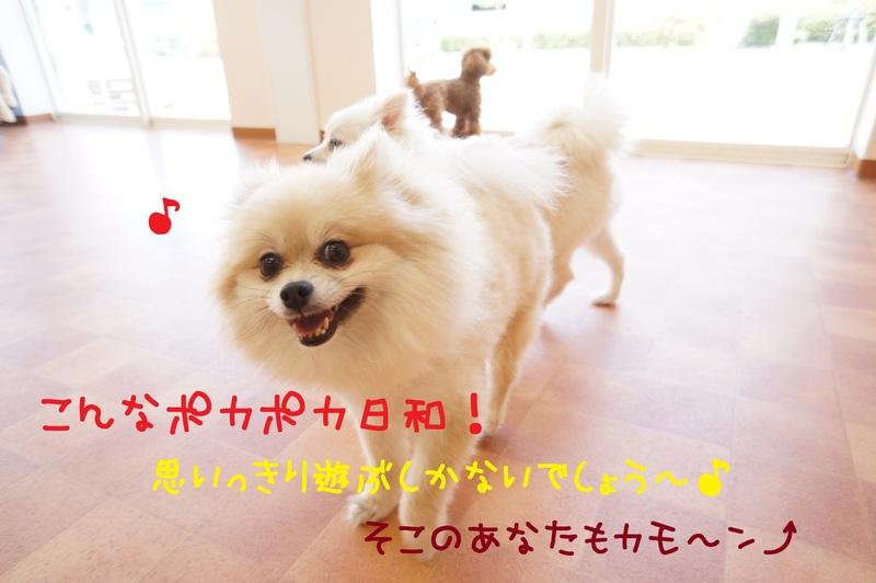 d0220513_1543019.jpg