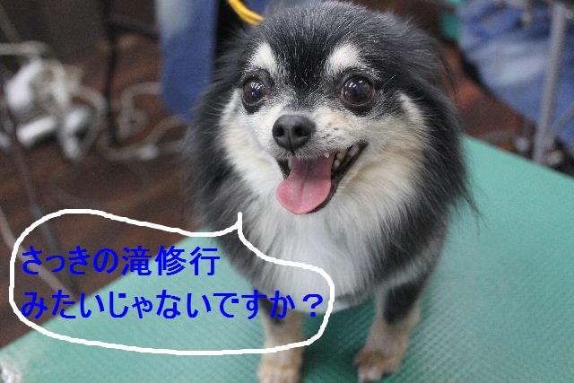 b0130018_1521750.jpg