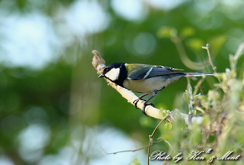 MF の鳥さん達 ^^_e0218518_22253792.jpg