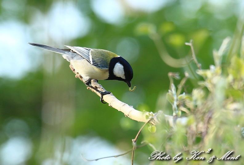 MF の鳥さん達 ^^_e0218518_2226469.jpg
