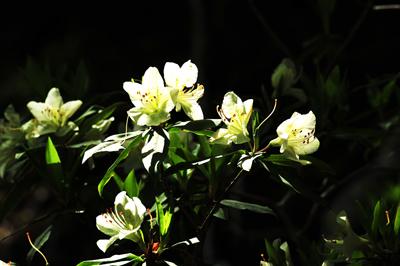快晴2日目の朝は少し寝坊気味で、昨日の「徒歩」の_b0169522_19511986.jpg