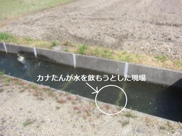 f0143123_10075855.jpg