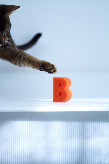 [猫的]Bilingual? Bilinnyal?_e0090124_2316491.jpg