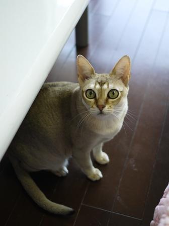 猫のお友だち プーちゃんとのくん編。_a0143140_22293580.jpg