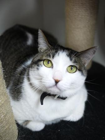 猫のお友だち プーちゃんとのくん編。_a0143140_22302749.jpg