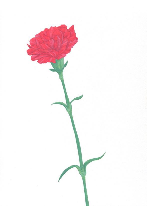 松屋銀座 【145人のイラストレーターによるカーネーションイラスト展】_b0136144_4263779.jpg