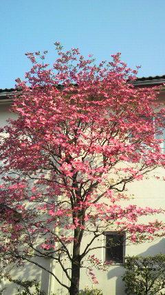春爛漫!_d0051146_5571487.jpg