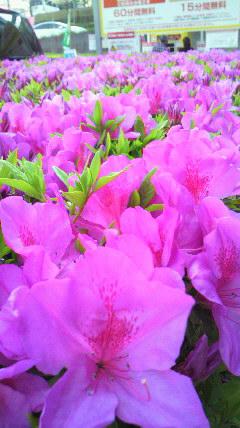 春爛漫!_d0051146_5571566.jpg