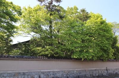 新緑の季節です_a0279848_14483639.jpg