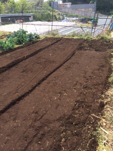 トマトの畝・・耕し中です・・リーキは全部収穫して お店に・・・_c0222448_18582456.jpg