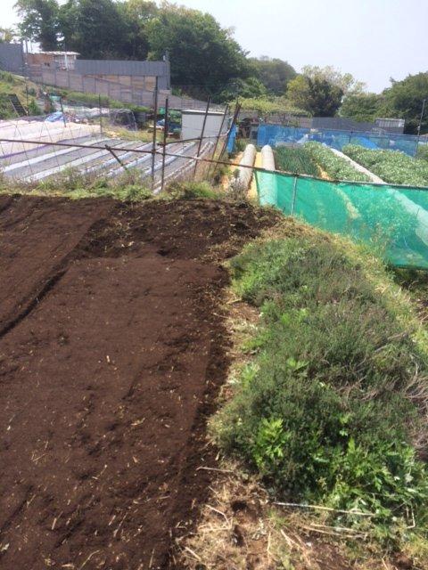 トマトの畝・・耕し中です・・リーキは全部収穫して お店に・・・_c0222448_18584744.jpg