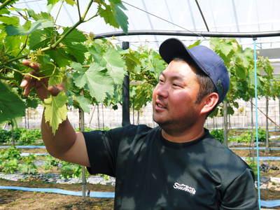 熊本ぶどう 社方園 蕾、花、着果 本物を育てる匠の技 その1_a0254656_20323216.jpg