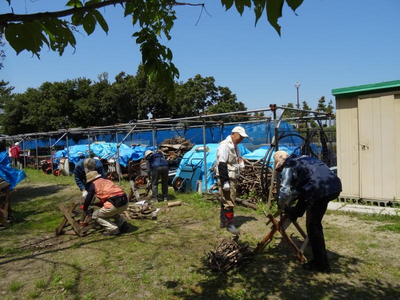 新山整備とササユリ保護作業の継続  in  うみべの森_c0108460_18100221.jpg