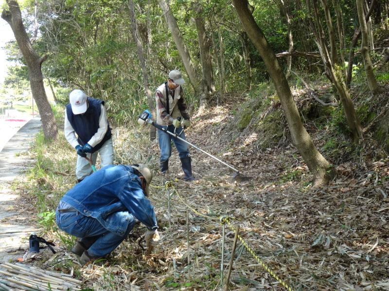 新山整備とササユリ保護作業の継続  in  うみべの森_c0108460_18100392.jpg