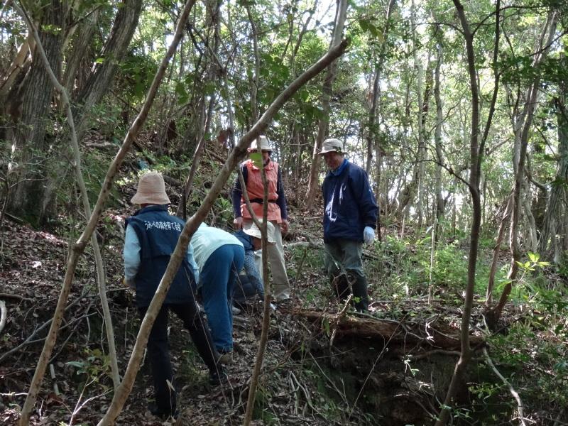 新山整備とササユリ保護作業の継続  in  うみべの森_c0108460_18100592.jpg