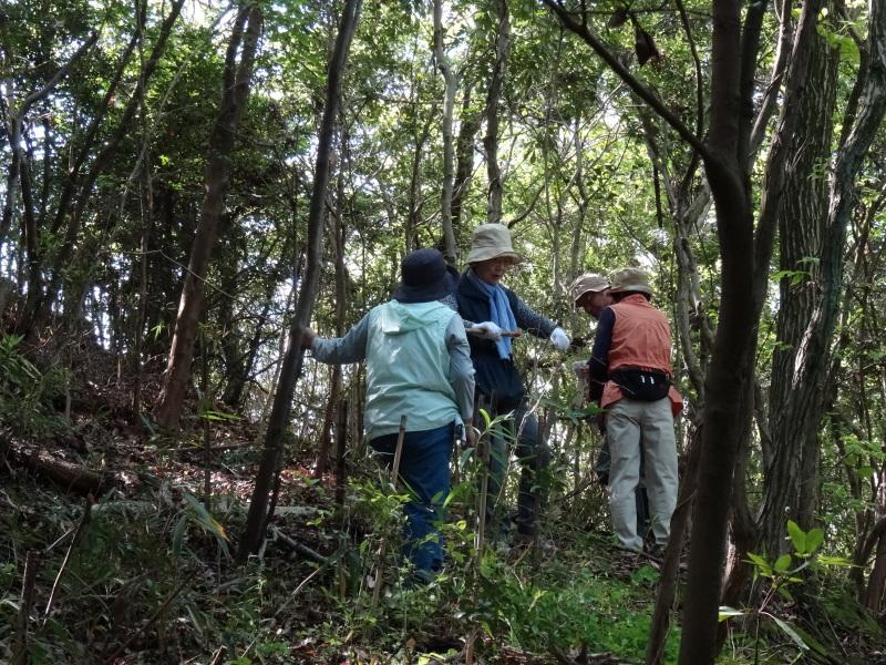 新山整備とササユリ保護作業の継続  in  うみべの森_c0108460_18100677.jpg