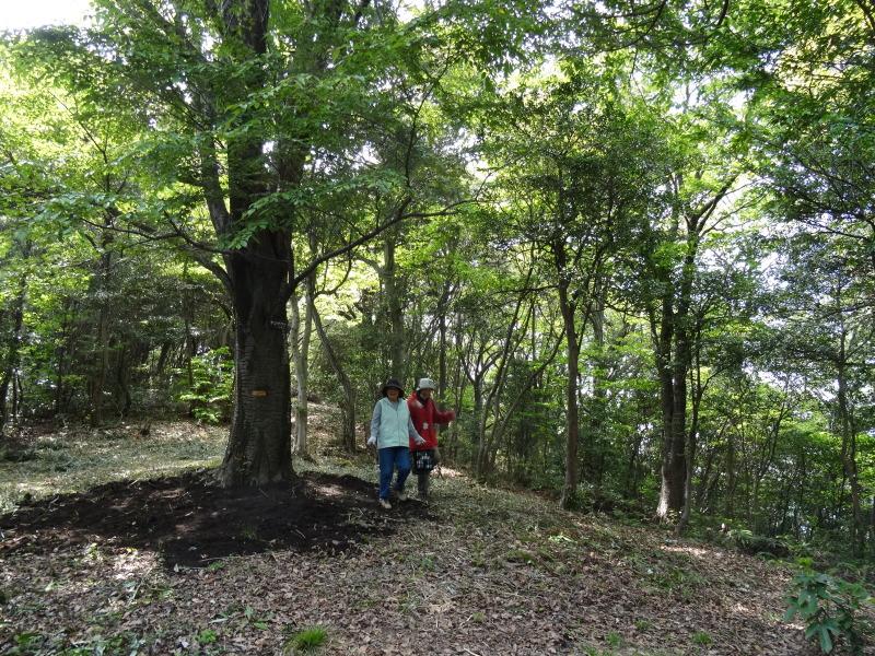 新山整備とササユリ保護作業の継続  in  うみべの森_c0108460_18112026.jpg
