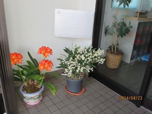 4年ぶり日本での春、少しホッです_b0100062_2392829.jpg